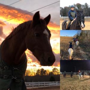 Ontopp Horses